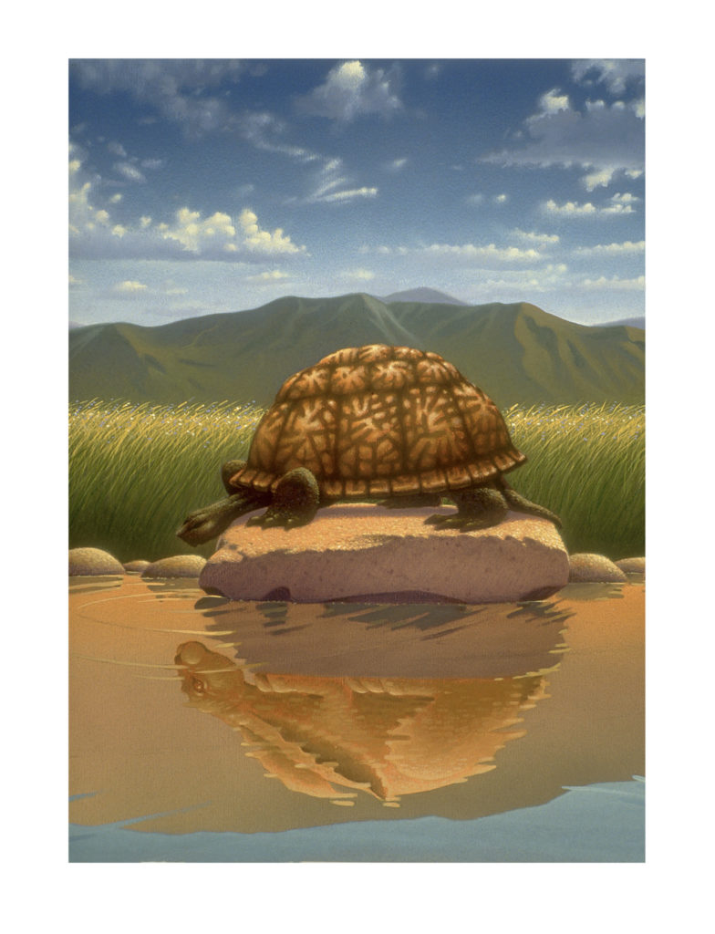 Tortoise and Hare parody_reflection